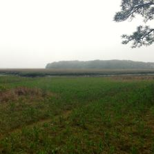 Our view out to the marsh