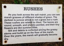 More info about our Marsh