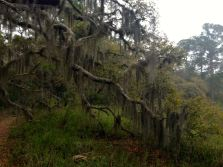 "And looks ""enchanted"" with the Spanish Moss"