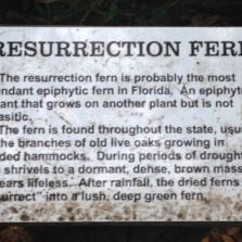 My favorite interpretive sign