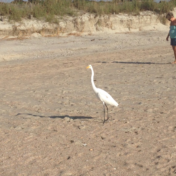 This Egret is checking out this fisherman's catch