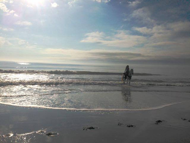 Horses on Myrtle Beach! (1/6)