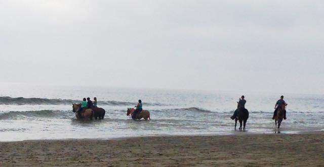 Horses on Myrtle Beach! (4/6)