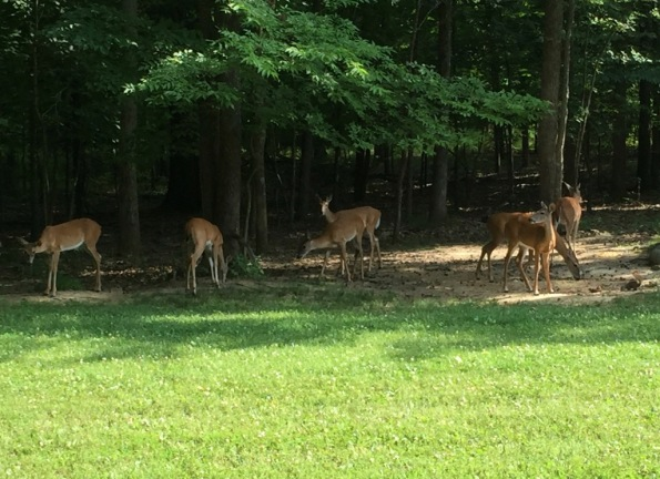 Deer greeted us!