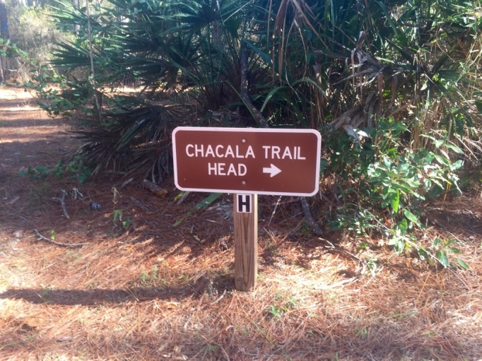 We never found the trail head.
