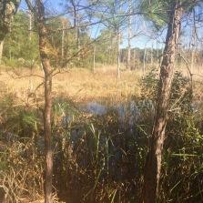 Marshy areas