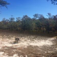 Cypress Pond.